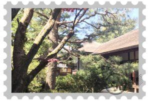 金沢で緑に囲まれて瞑想