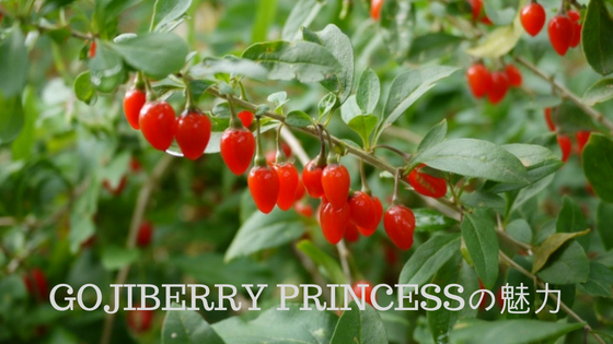 gojiberry_princess